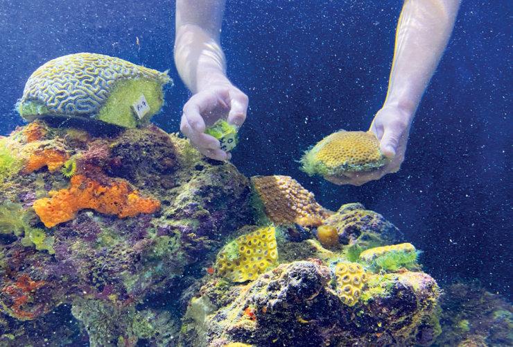 Coral World Ocean Park Display of UVI Corals