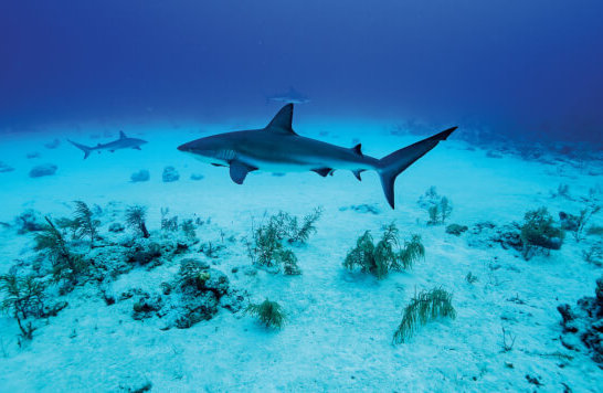 Beneath The Waves - SHARKWATER DAY, Cayman Islands. Credit Diego Camejo for Beneath The Waves
